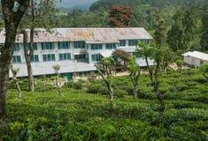 Grand bâtiment d'usine de thé aux plantations de thé vert énormes au paysage rural Images libres de droits