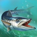 Grand grand barracuda de poissons sur l'océan image libre de droits
