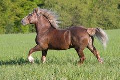 Grand beau fonctionnement de cheval Photographie stock libre de droits