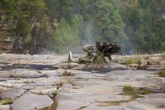 Grand bois de flottage de morceau sur le lit de la rivière en pierre Photographie stock