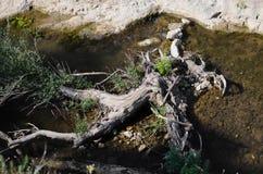Grand bois en rivière Image libre de droits