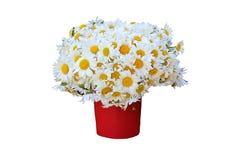 Grand bouquet des camomiles dans un vase image stock