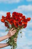 Grand bouquet des pavots rouges chez des mains de la femme image stock