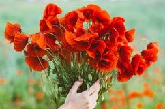 Grand bouquet des pavots rouges chez des mains de la femme photo stock