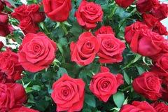 Grand bouquet lumineux fraîchement de grandes roses rouges de coupe. Photographie stock libre de droits