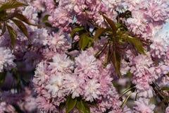 Grand buisson gentil photo stock