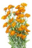 Grand Bush d'isolement des fleurs oranges Photo libre de droits