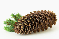 Grand cône de pin avec la brindille de pin Photo stock