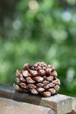 Grand cône de pin sur le conseil en bois Images libres de droits