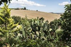 Grand cactus Image stock