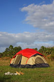 Grand camper de Cypress Photos stock