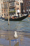 Grand Canal with Gondola (Venice, Italy). VENICE, ITALY - SEPTEMBER 30: Photo of Venice, where the gondolier carrying tourists on the Grand Canal on September 30 Royalty Free Stock Photography