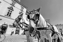 Horse-drawn carriage at the Cathedral, Stephansplatz - The main square of Vienna, Historic City Centre, Vienna, Austria Royalty Free Stock Photography