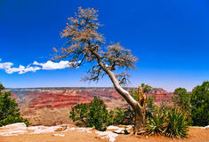 In Grand Canyon Stock Image
