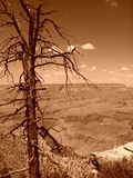 Grand Canyon. View of the Grand Canyon, Arizona, U.S.A. (sepia filter used stock photo