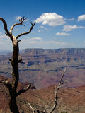 Grand Canyon. Arizona, U.S.A royalty free stock photos