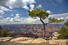 Grand Canyon Lizenzfreie Stockbilder