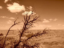 Grand Canyon. View of the Grand Canyon, Arizona, U.S.A. (sepia filter used stock images