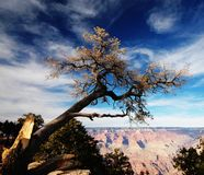 Grand canyon-2. 2005 year trip to USA Royalty Free Stock Photography