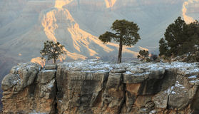 Grand Canyon. Snow and trees at Grand Canyon stock images