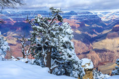 Grand Canyon. The Grand canyon national park in snow stock images