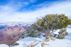 Grand Canyon Royalty Free Stock Photos