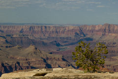 Grand Canyon #2 Fotos de Stock Royalty Free