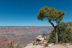 Free Grand Canyon Royalty Free Stock Photos - 80325088