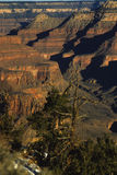 Grand Canyon. A great view of the depth and color of the grand canyon Royalty Free Stock Photo