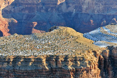 Grand Canyon aerial landscape Stock Images