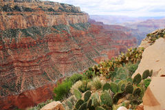 Grand Canyon aerial view landscape. Stock Image