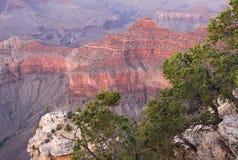 Grand Canyon al tramonto con gli alberi sulla priorità alta Immagini Stock