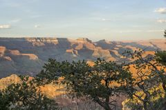 Grand Canyon -Ansicht über Bäume lizenzfreies stockbild