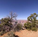 The Grand Canyon in Arizona Royalty Free Stock Photo