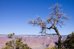 Grand Canyon Arizona Stock Image