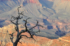 Grand Canyon Arizona Lizenzfreies Stockbild