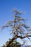 Grand Canyon Arizona dead tree Stock Image