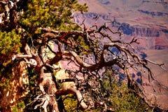 Grand Canyon Arizona Stock Image