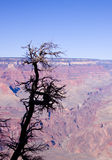 Grand Canyon Arizona tree Stock Photo