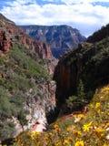 Grand Canyon, Arizona, USA Stock Images