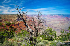 Grand Canyon, Arizona, USA Royalty Free Stock Photo