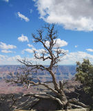 Grand Canyon, Arizona. stock images
