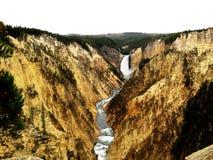 Grand Canyon av Yellowstonen (USA) Arkivfoton