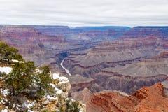 Grand Canyon -Bäume mit Winter schneien und nach Westen schauen Stockfotografie