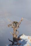 Grand Canyon -Baum im Winter-Sturm Lizenzfreie Stockbilder