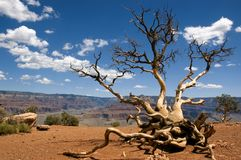 Grand Canyon ; Cedar Ridge royalty free stock images