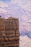 Grand Canyon Cliff With Two Trees In Foreground Stock Photo