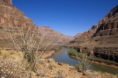The Grand Canyon and the Colorado River Stock Photography