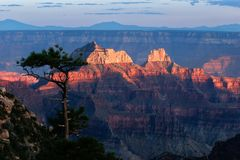 Grand Canyon of the Colorado River. Sunset at the north rim of the Grand Canyon Stock Photography