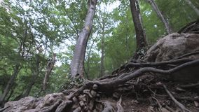 Grand canyon of Crimea. Crimean mountains, forest, mountain river stock footage
